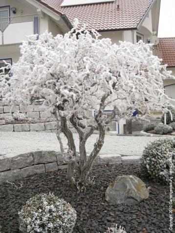 2021-Winter015